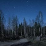 Pădure de anini