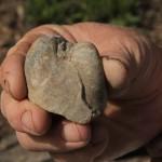 Fosilă de scoică (Depozitul Fosilifer Glodu)